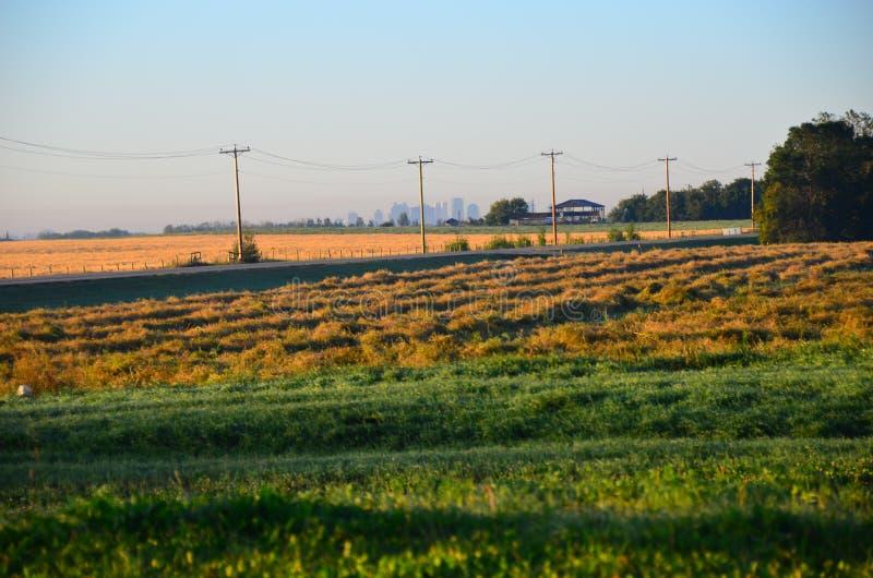 Campos de grano Alberta Canada foto de archivo libre de regalías