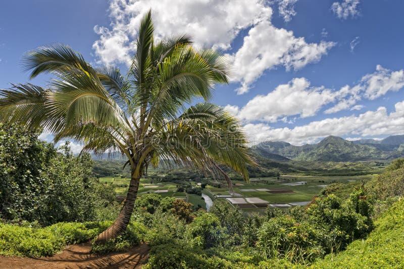 Campos de Hawaii Kauai fotografía de archivo libre de regalías