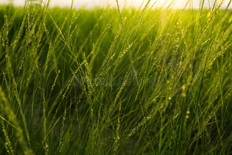 Campos de hierba foto de archivo