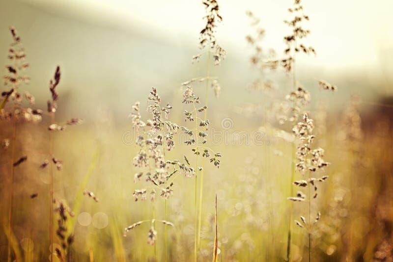 Campos de hierba ahumados de la ensenada de Cades de las montañas imágenes de archivo libres de regalías