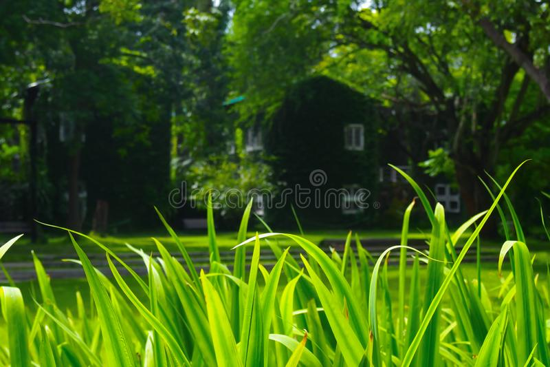 Campos de hierba verde frescos en un fondo natural imagen de archivo libre de regalías