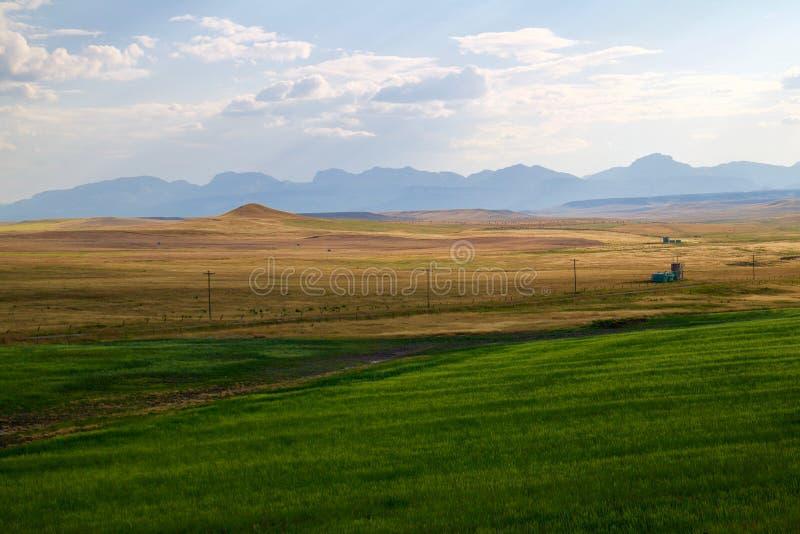 Campos de hierba verdes y amarillos imagen de archivo