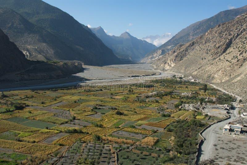 Campos de Kali Gandaki imagem de stock