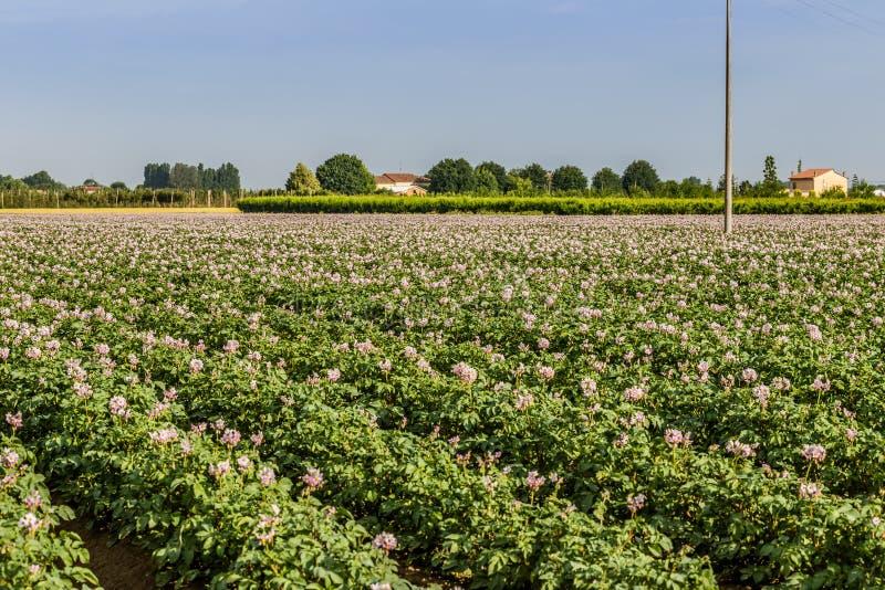 Campos de la patata fotos de archivo