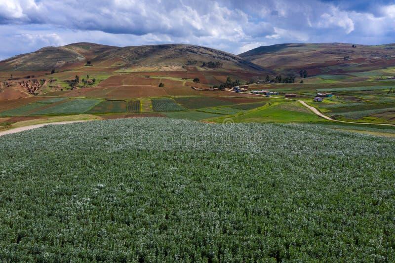 Campos de la patata en las montañas de Perú foto de archivo libre de regalías