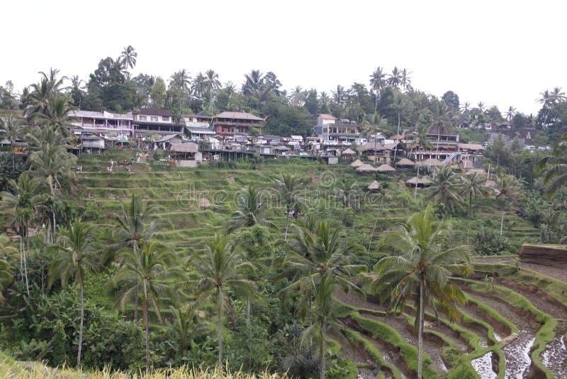 Campos de la terraza del arroz fotografía de archivo