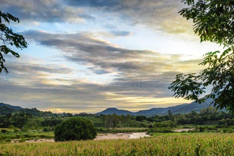 Campos de maíz con fluir de los ríos foto de archivo