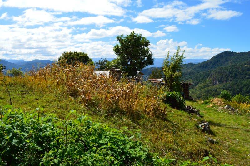Campos de maíz en Capulalpam de Méndez en las montañas de Oaxaca imagenes de archivo