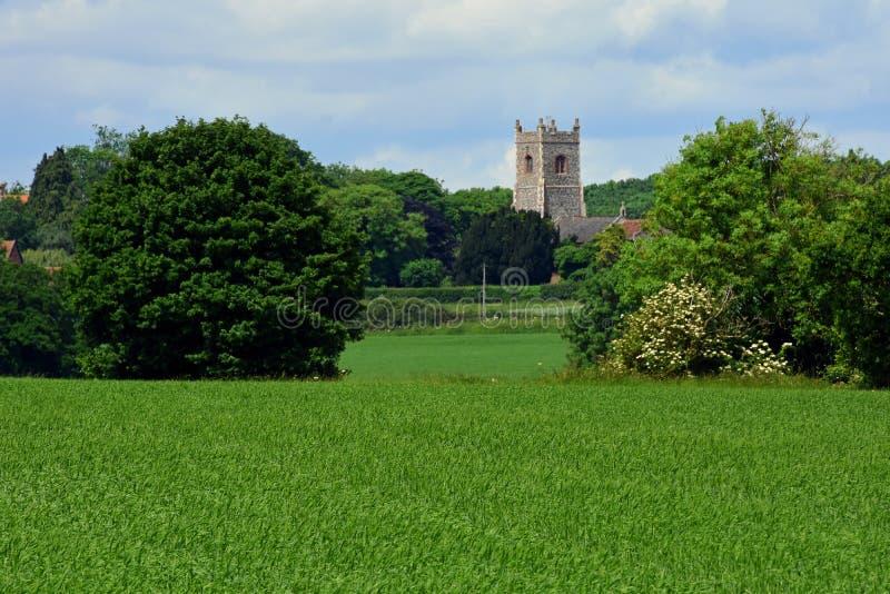 Campos de maíz y iglesia, Shotesham, Norfolk, Inglaterra en junio imagen de archivo libre de regalías