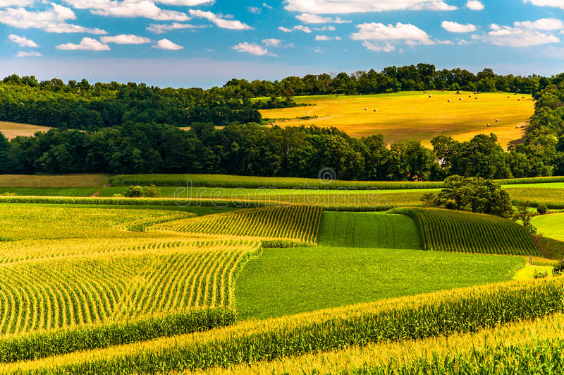Campos de milho e Rolling Hills no Condado de York rural, Pensilvânia foto de stock