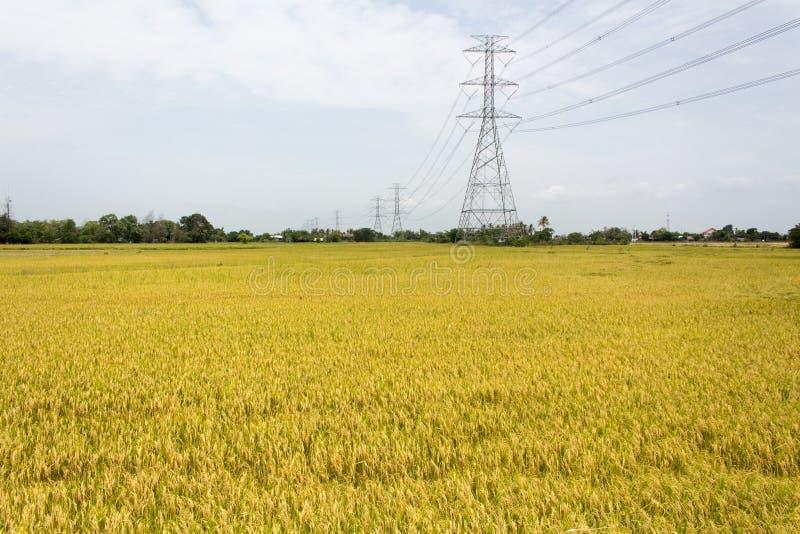 Campos de oro del arroz fotografía de archivo libre de regalías