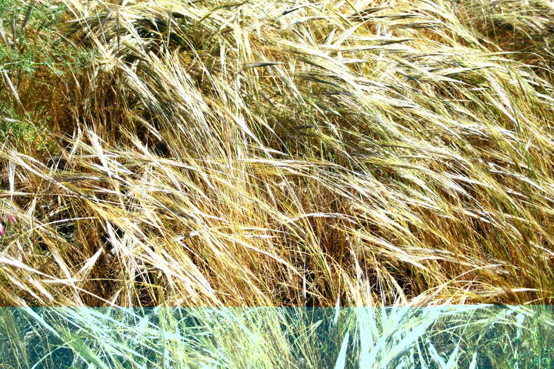 Campos de oro en el viento fotos de archivo libres de regalías