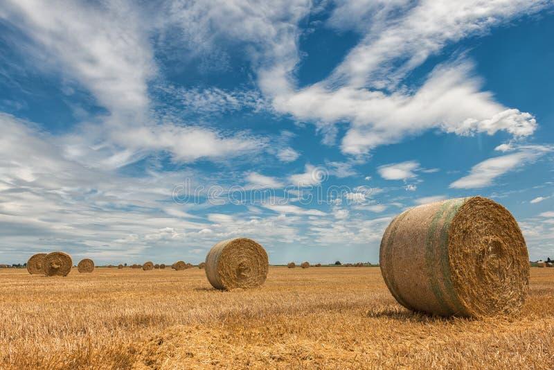 Campos de trigo cosechados fotografía de archivo libre de regalías