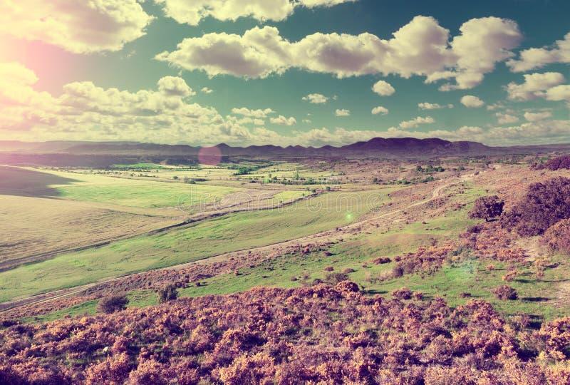 Campos de trigo e cenário da grama verde fotografia de stock royalty free