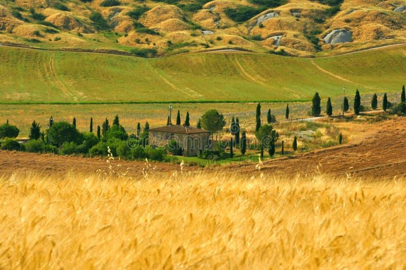 Campos de trigo em Toscânia, Italy imagens de stock royalty free