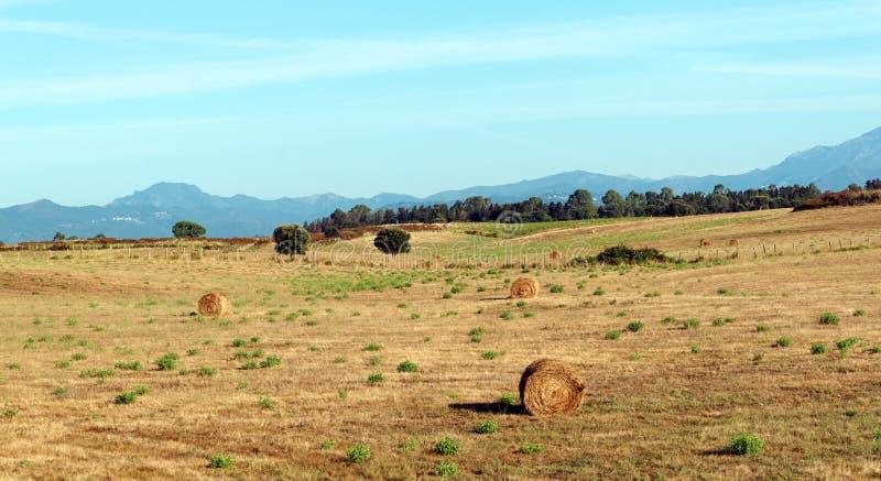 Campos de trigo en Córcega fotografía de archivo
