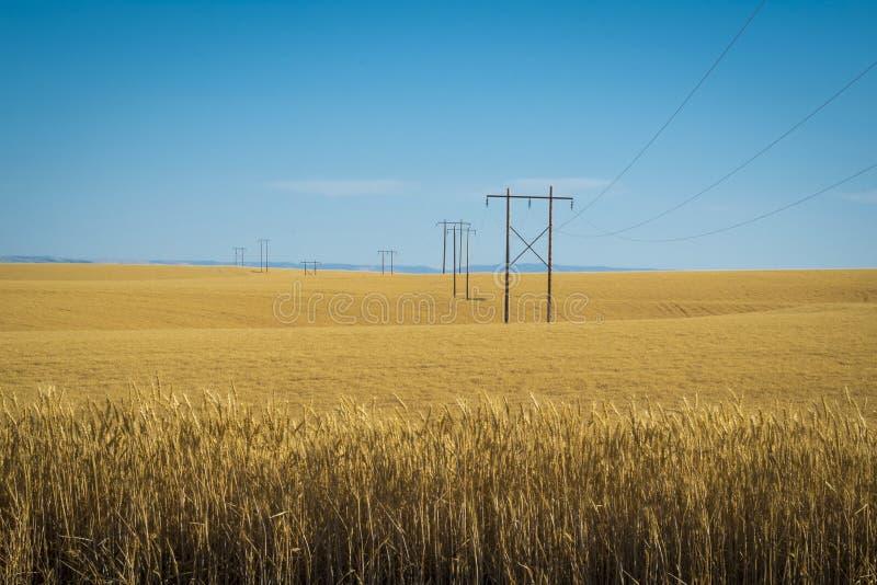 Campos de trigo, líneas eléctricas, Washington del este fotografía de archivo libre de regalías