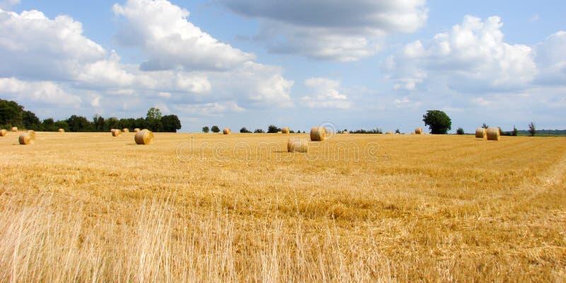 Campos de trigo no campo sob o sol e o céu azul foto de stock