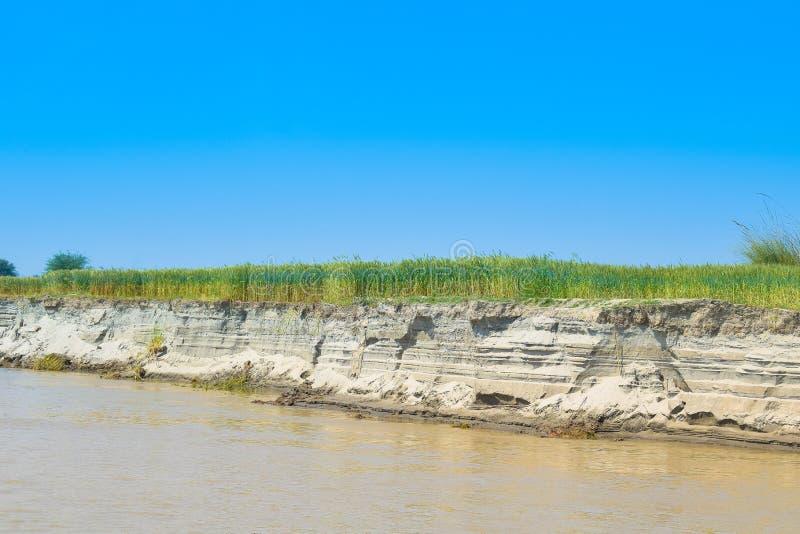 Campos de trigo verdes en el banco del río indus imagen de archivo