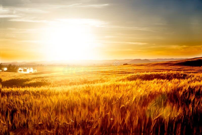 Campos de trigo y paisaje de la puesta del sol imagen de archivo libre de regalías