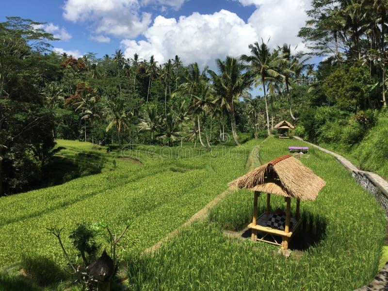 Campos del arroz del Balinese imagen de archivo libre de regalías