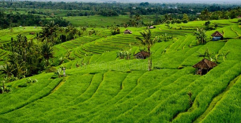 Campos del arroz de Bali fotos de archivo