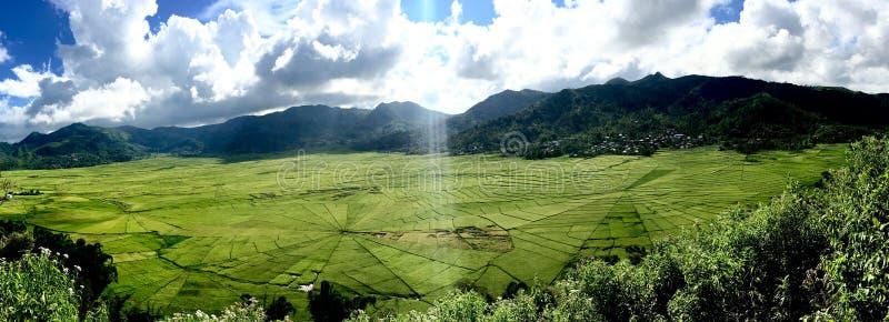 Campos del arroz de Cancar Spiderweb foto de archivo