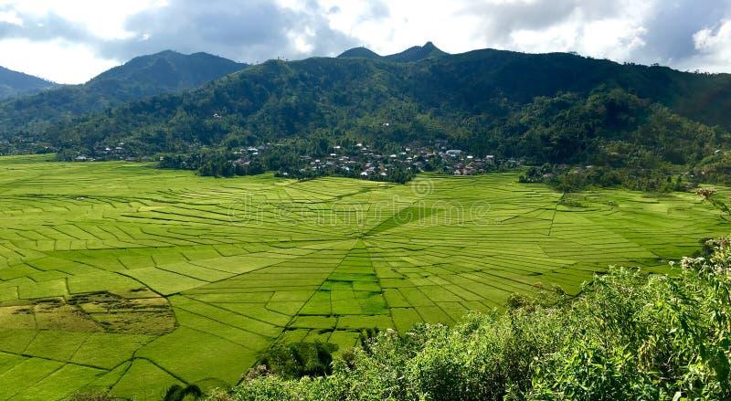 Campos del arroz de Cancar Spiderweb imagen de archivo