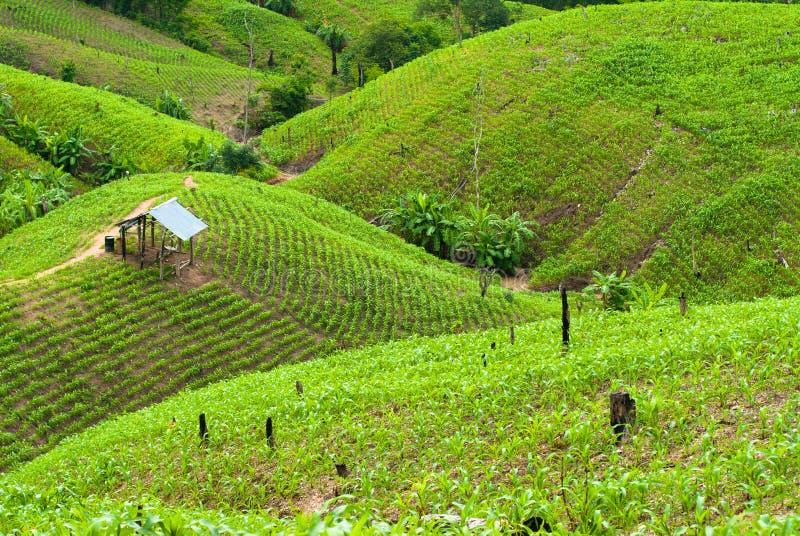 Campos del arroz de la terraza fotos de archivo