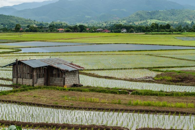 Campos del arroz de la terraza en el fondo natural de la montaña fotos de archivo libres de regalías