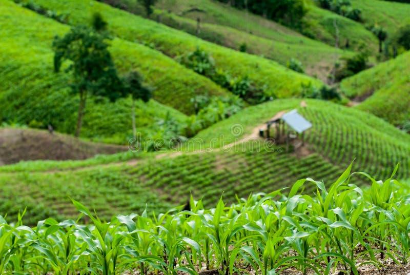 Campos del arroz de la terraza en Mae Chaem District Chiang Mai, Tailandia imagenes de archivo