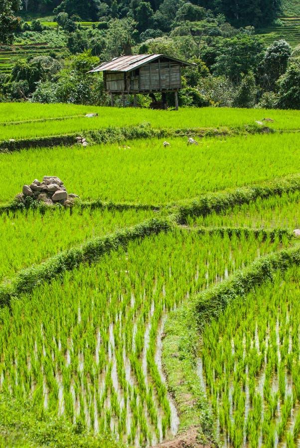 Campos del arroz de la terraza en Mae Chaem District Chiang Mai, Tailandia fotografía de archivo