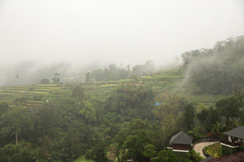 Campos del arroz en la selva fotografía de archivo
