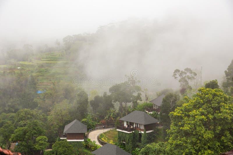 Campos del arroz en la selva imagen de archivo libre de regalías