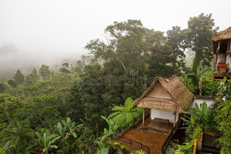 Campos del arroz en la selva fotos de archivo libres de regalías