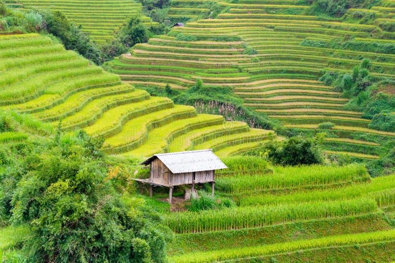 Campos del arroz en Vietnam del noroeste foto de archivo