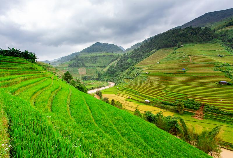 Campos del arroz en Vietnam del noroeste fotos de archivo libres de regalías