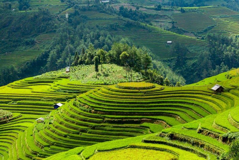 Campos del arroz en Vietnam del noroeste fotografía de archivo