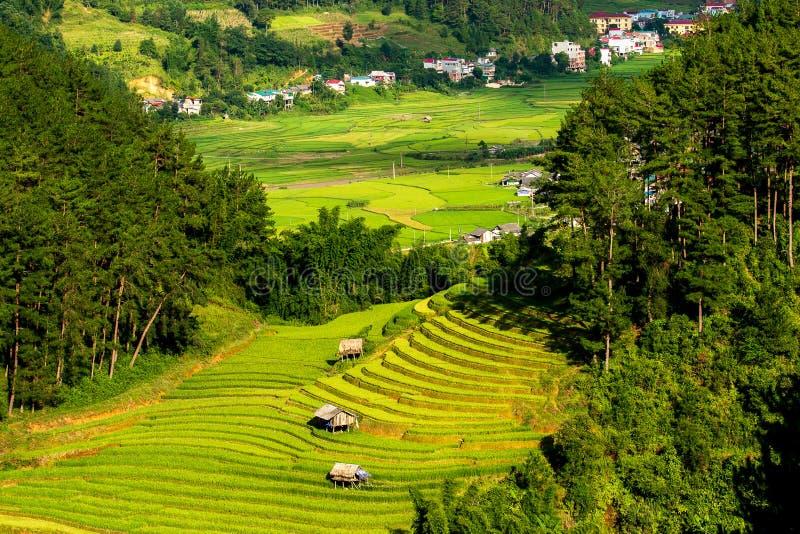Campos del arroz en Vietnam del noroeste imagenes de archivo