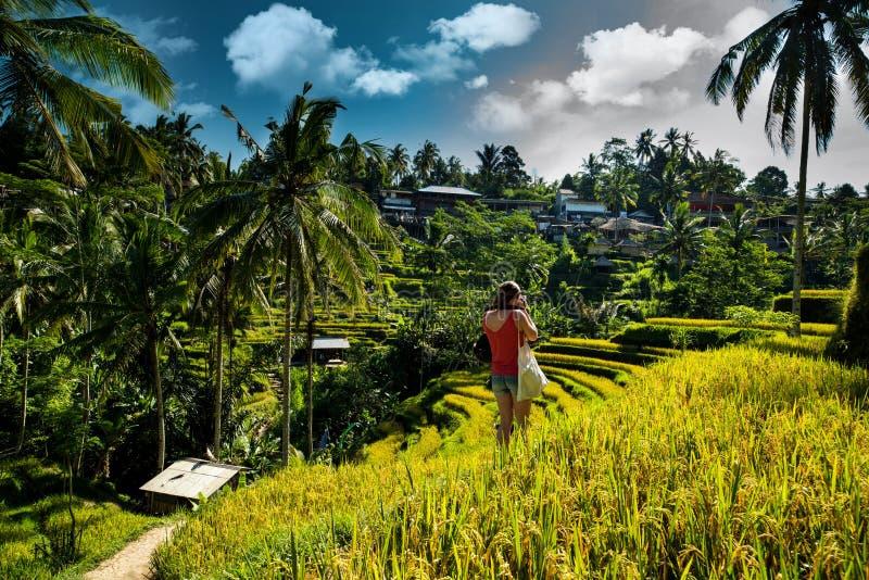 Campos del arroz y muchacha del fotógrafo Ubud, Bali, Indonesia fotos de archivo