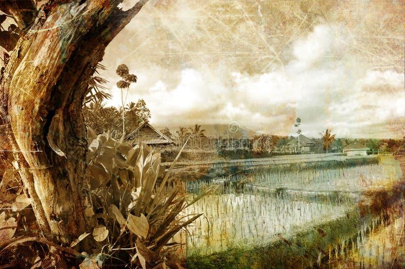 Campos del Balinese fotos de archivo libres de regalías