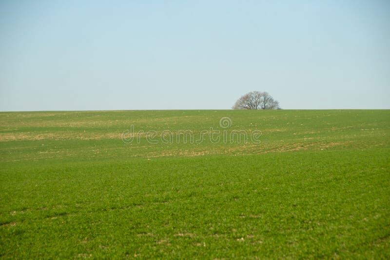 Campos del invierno y llanuras del sur del árbol imagenes de archivo