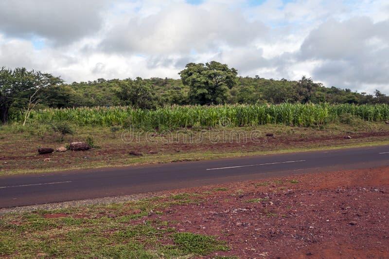 Campos del maíz en Tanzania foto de archivo