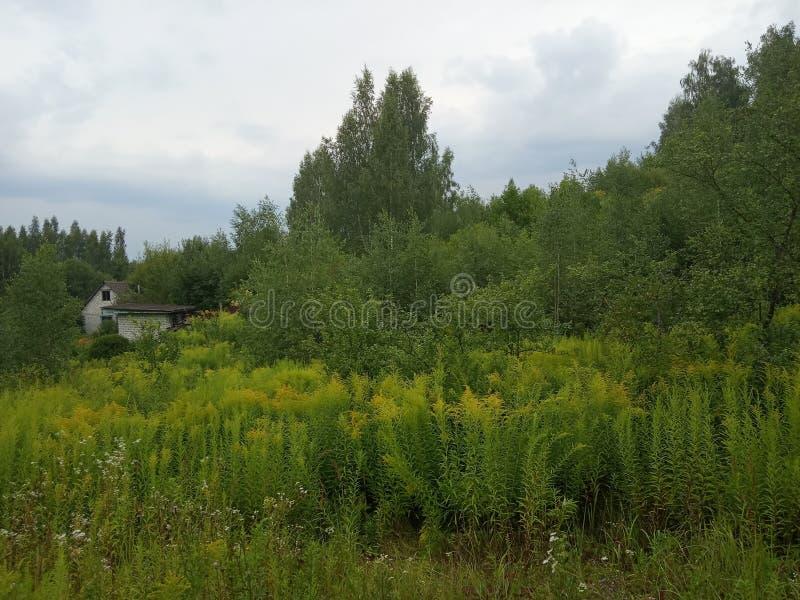 Campos del verano antes de la lluvia imagenes de archivo