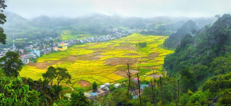 Campos do arroz da colheita em enevoar-se do amanhecer imagens de stock