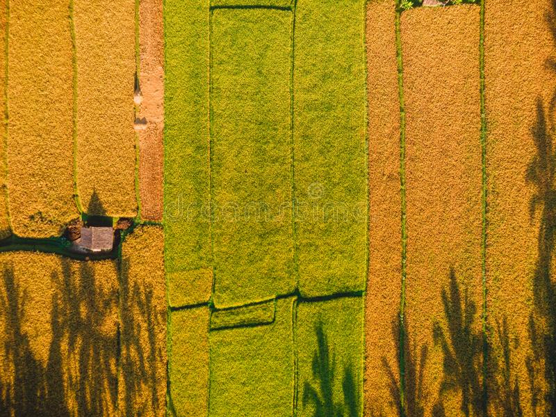 Campos do arroz da ilha de Bali, Indonésia Vista aérea, vista superior imagens de stock