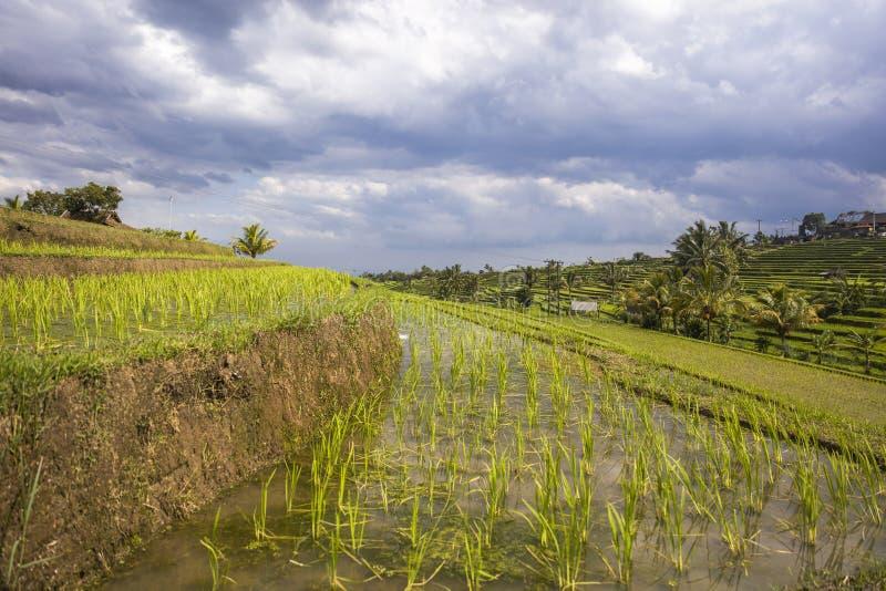 Campos do arroz de Jatiluwih em Bali do sudeste fotografia de stock