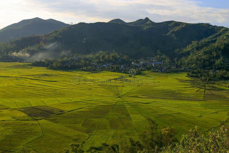 Campos do arroz de Spiderweb fotos de stock