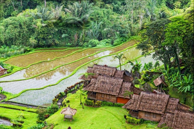 Campos do arroz do terraço foto de stock
