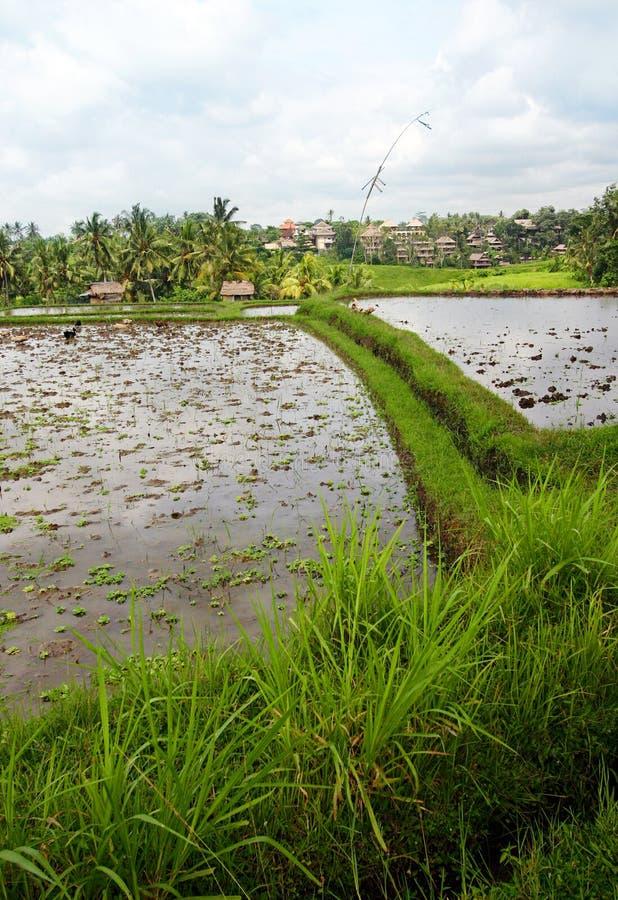 Campos do arroz e casa, Bali fotografia de stock